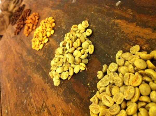 beans during the roasting process