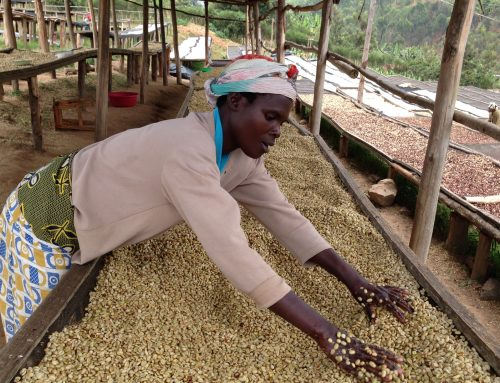My Time at the Rwanda Hingakawa Co-Op